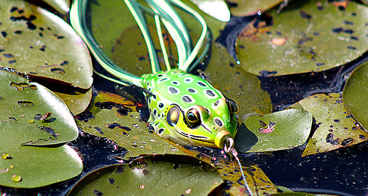 Some of the effective fishing tips using frog lures